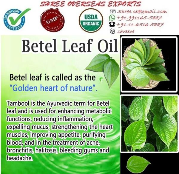 Best quality Betel Leaf O