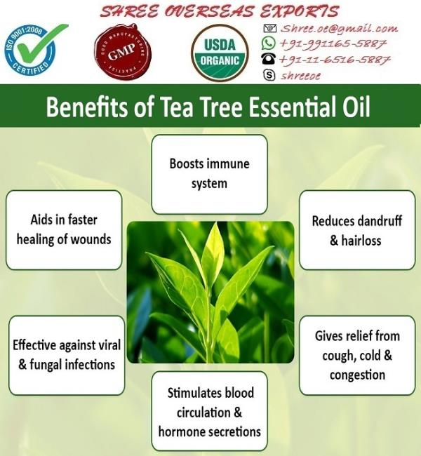 Tea Tree Oil   (Melaleuca