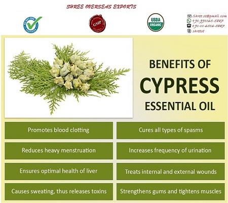 Best and Top rated Manufacturer and Exporter of Cypress oil in London, United Kingdom | Shree Overseas Exports Powerful Cypress Essential oil have ability to fight with diseases, help the respiratory system, remove toxins from the body. Shree Overseas Exports are Exporting Best quality Cypress oil in London, United Kingdom. Shree overseas exports are the best manufacturer in London, United Kingdom. Shree Overseas exporting is also providing No MOQ (Minimum Order quantity) with private labeling.