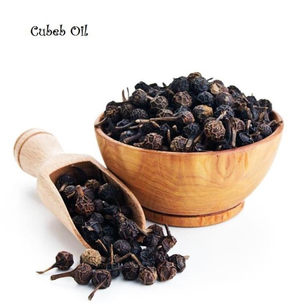 Best Exporter and Manufacturer of Cubeb oil in Bermingham, United Kingdom | Shree Overseas Exports It is utilized as a part of massage oil for relieving stress and muscular pain. This oil is likewise extremely viable in the treatment of urinary tract infections. This oil is extremely valuable in the treatment of contaminations and aggravations. The peppery scented oil has a mild stimulating effect.