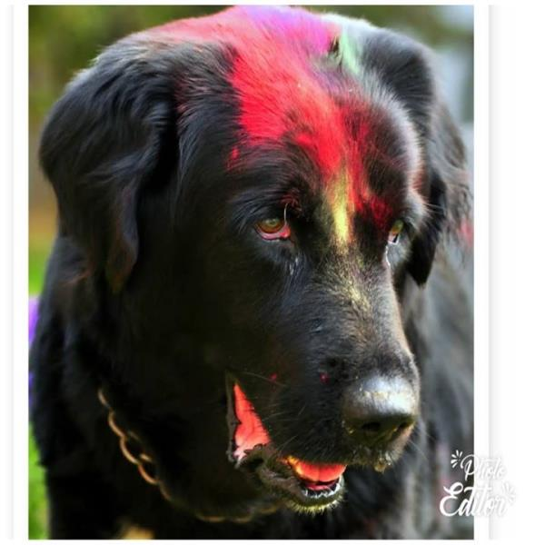 Holi is not for pets!!!Q
