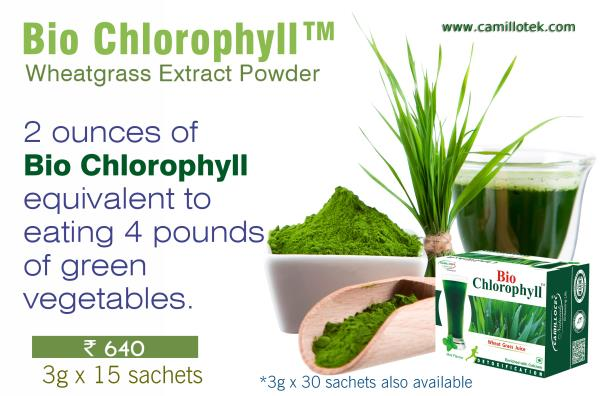2 ounces of our Bio Chlorophyll  wheatgrass extract powder is equivalent to eating 4 pounds of green vegetables.  wheat grass juice powder manufacturers, wheatgrass extract manufacturers, wheatgrass extract suppliers, wheatgrass powder chlo - by Natural Wellness Inc., Chennai