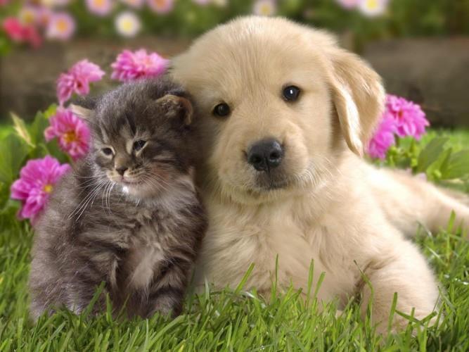 best pet clinic most