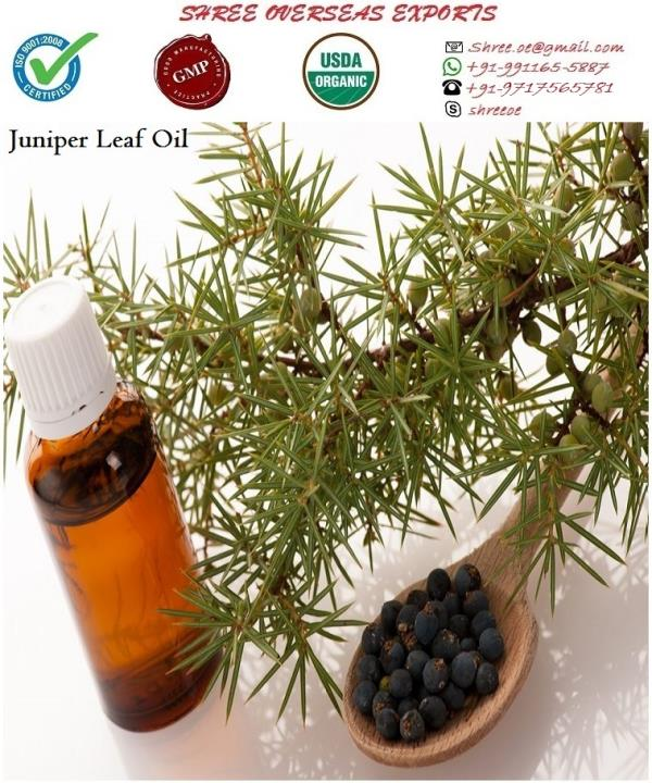 Best quality Juniper leaf