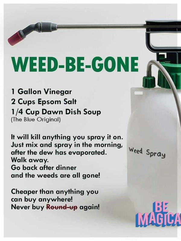 Home Garden tips..
