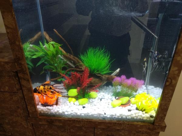 Best aquarium decora
