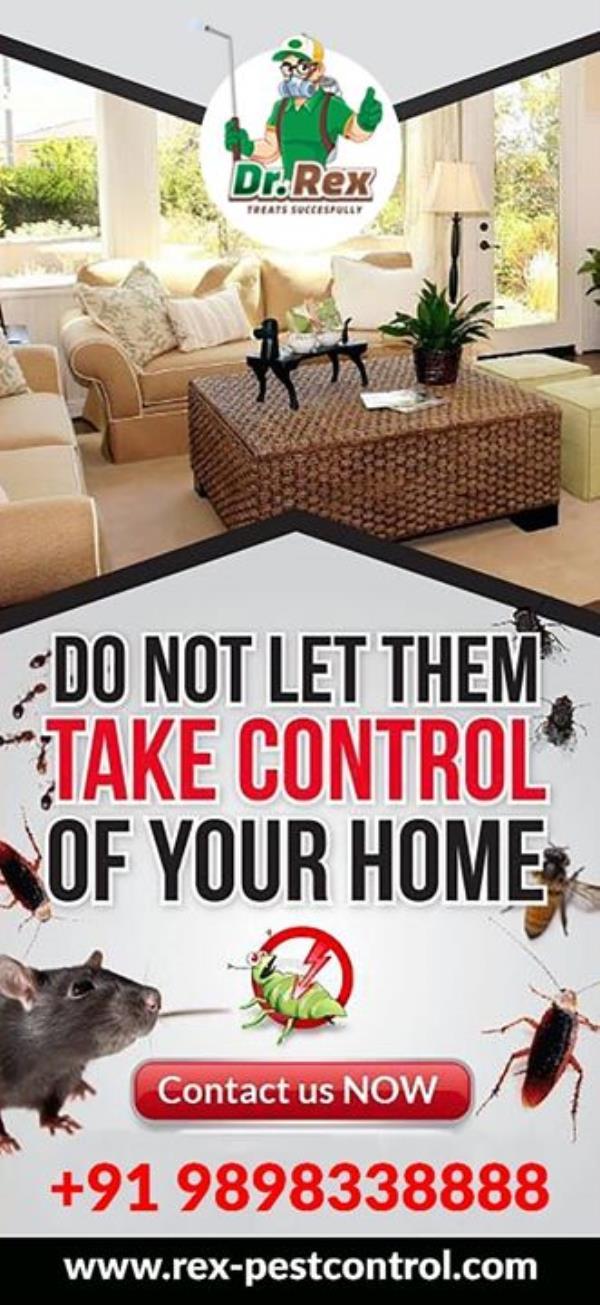 #Rexpestcontrol #Pestcontrol#DrRex