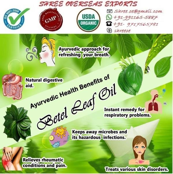 Manufacturer and Exporter of Betel Leaf Oil in London, United Kingdom | Shree Overseas Exports Betel leaf oil is exported from Betel Leaf. Betel leaf essential oil best remedies for treating plaque, dental decay, dental caries and other oral infections. Betel leaf oil is best for aromatherapy. Betel leaf essential oil with its warming properties increases the heat energy in the system. Shree Overseas Exports is Manufacturing best quality Betel Leaf Oil in London, United Kingdom. With No MOQ (Minimum order quantity).