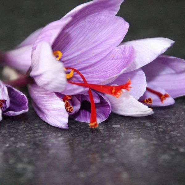 Let's pick some saffron! Did you know it takes 250.000 crocus flowers to get a kilo of world's most precious spice.🌸 saffron Afghanistan precious Work Done By Hand purple https://shopinhome.com/saffrongold. For more info visit us at http://updates.shopinhome.com/Let-s-pick-some-saffron-Did-you-know-it-takes-250-000-crocus-flowers-to-get-a-kilo-of-world-s-most-precious-spice-saffro/b633?utm_source=facebookpage