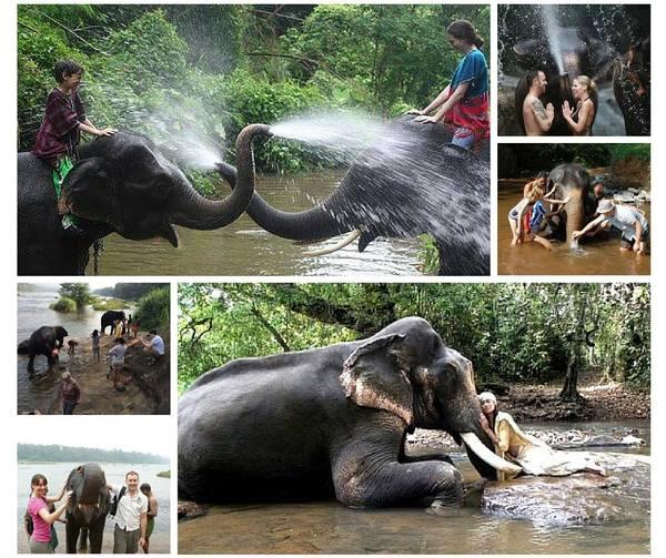 Elephant bathing in Kodanad. .