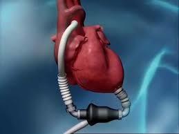 heart doctors near me   LIFEST
