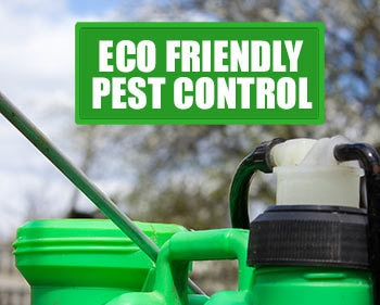 Best Pest Control Company in Vadodara, with latest Technologies and Equipments we provide Eco Friendly Pest Treatment.Call us Now