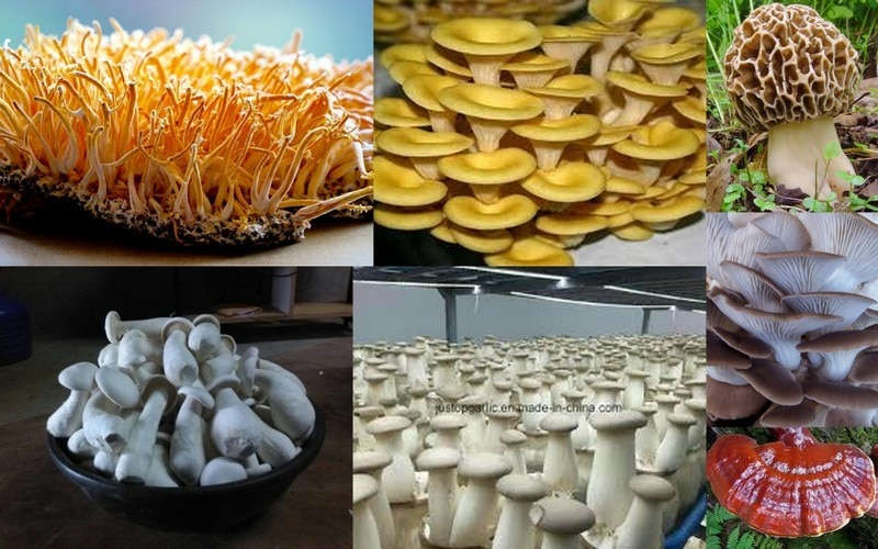 DR MOHAN MUSHROOMS RESEARCH &
