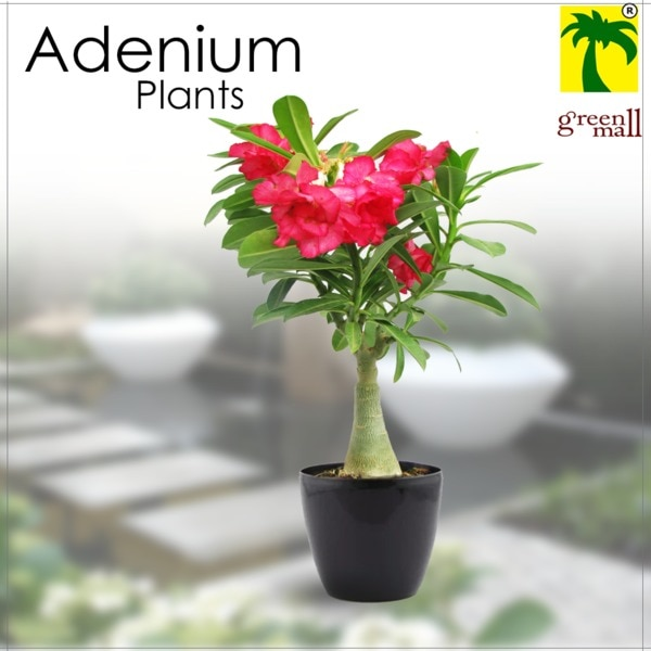 indoor plants for sale  This #