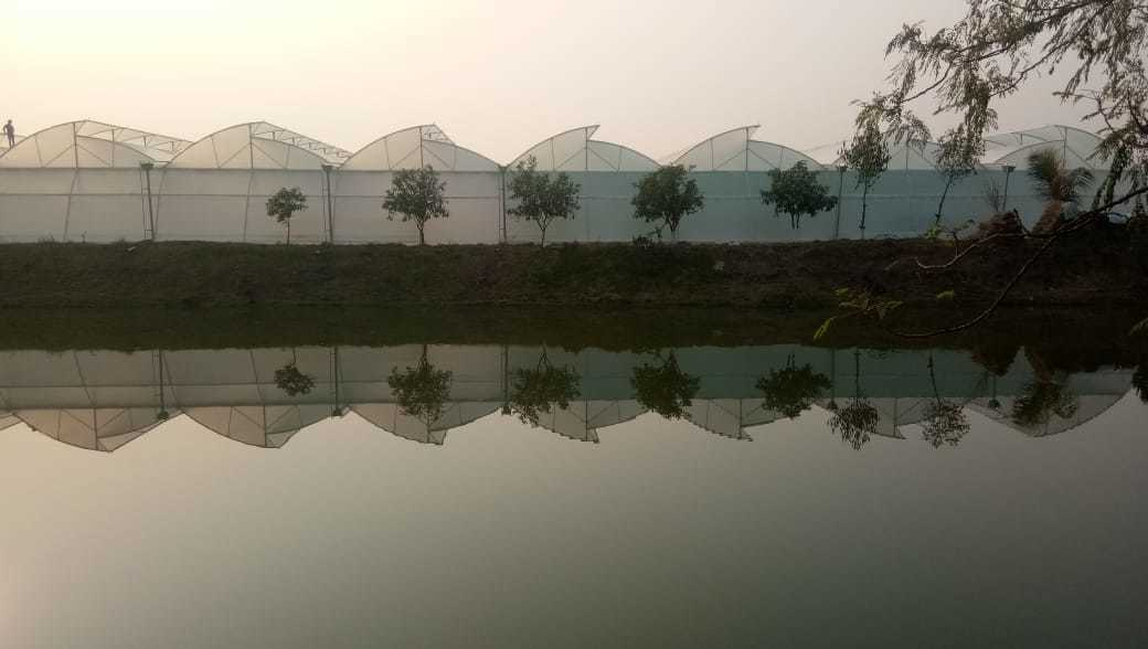 Our New Project Naturally Ventilated Poly Green HOuse at Hooghly