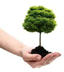 online festival eco friendly r